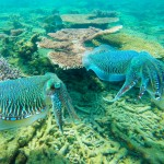 3 Days 2 Nights Kapas Coral Beach Resort, Kapas Island