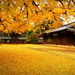 6 Days 5 Nights Korea Summer & Autumn
