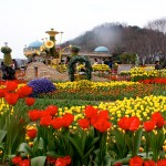 5 Days 4 Nights Korea Summer & Autumn
