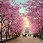 7 Days 6 Nights Korea Spring Muslim Tour